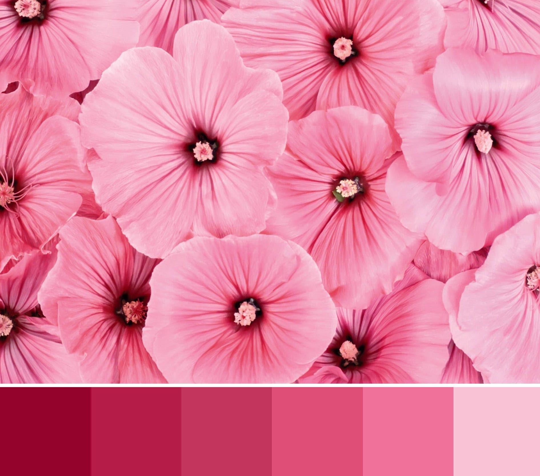 چگونگی و دلیل انتخاب رنگ سال