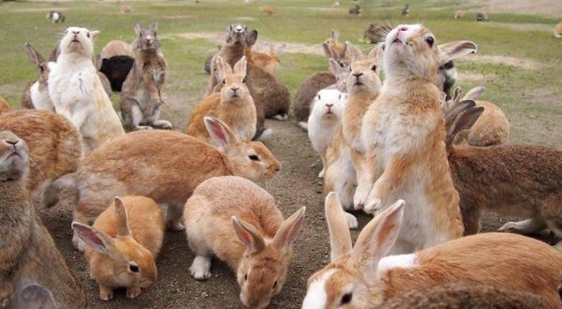 جزیره خرگوشی