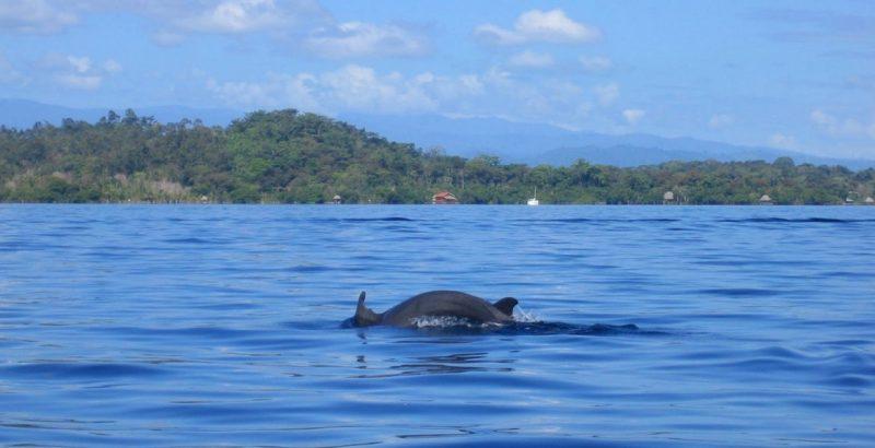 خلیج دلفین هابوکاس دل تورو