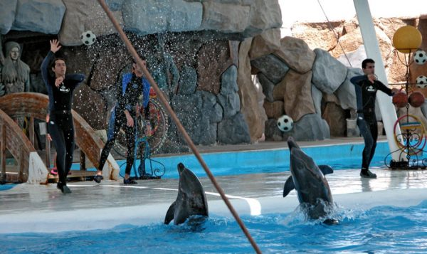 پارک دلفین ها کیش
