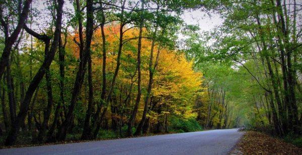 جنگل نور