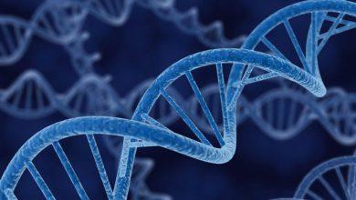 Photo of همانندسازی و چاپ DNA