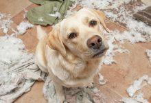 Photo of مراقبتهای عمومی از سگ