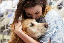 Photo of تاریخچه درمان با کمک حیوانات