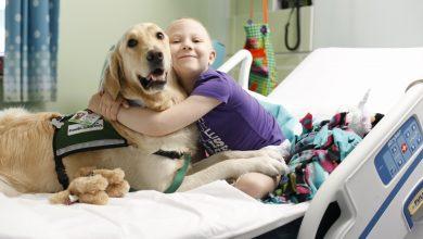 Photo of استفاده مدرن از حیوانات درمانی