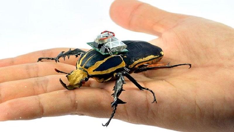 حشرات جاسوس