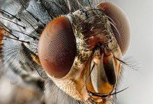 Photo of حشرات جاسوس : عصر جاسوسی مدرن