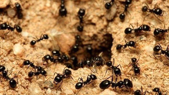 جهت یابی به کمک لانه ی مورچه