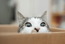 Photo of درباره گربه ها چیزهایی هست که نمی دانیم!