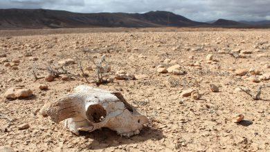 Photo of بحران انقراض