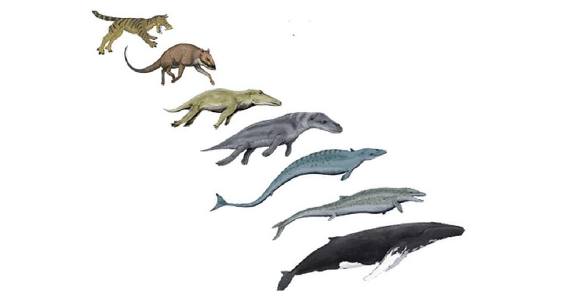 نظریه تکامل داروین و انتخاب طبیعی