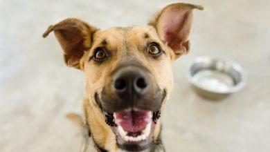 Photo of چگونه سگها میتوانند در جهان پیرامون خود بشنوند و حرف بزنند