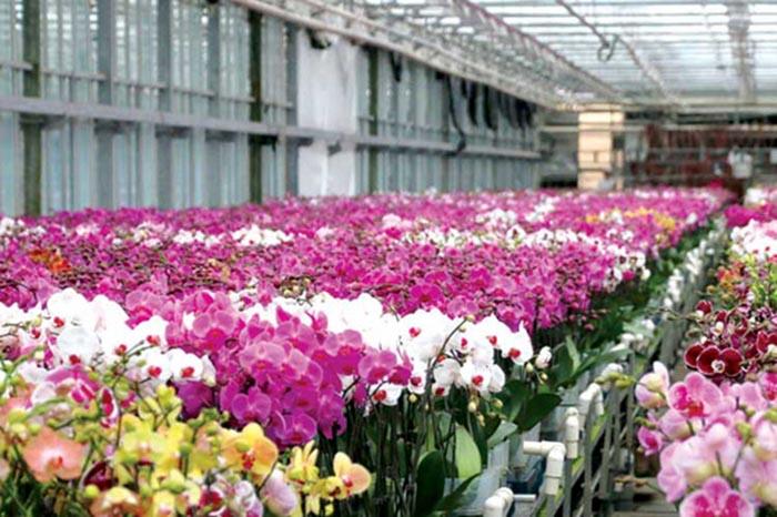دهکده گل و گیاه زینتی محلات