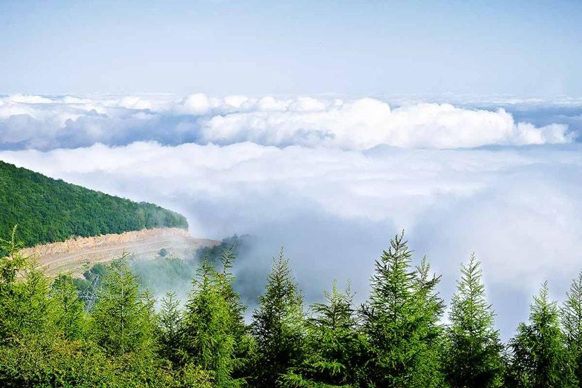 جنگل ابر شاهرود