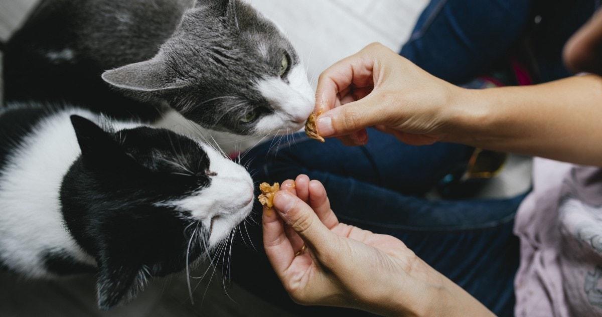 حسادت در حیوانات خانگی