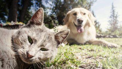Photo of سگها و گربهها واقعا حسودند یا ما چنین گمان میکنیم