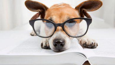 Photo of نگاه ابتدایی به ذهن سگ