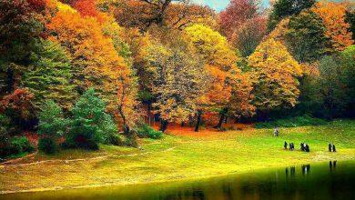 Photo of جنگلهای ۴۰ میلیون ساله هیرکانی ثبت جهانی شد