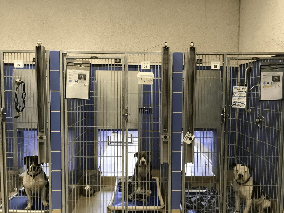 پناهگاه حیوانات سرگردان و رهاشده