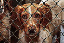 Photo of آیا ساخت پناهگاه برای حیوانات گزینهی مناسبی است؟