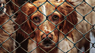 Photo of وضعیت پناهگاه حیوانات در ایران