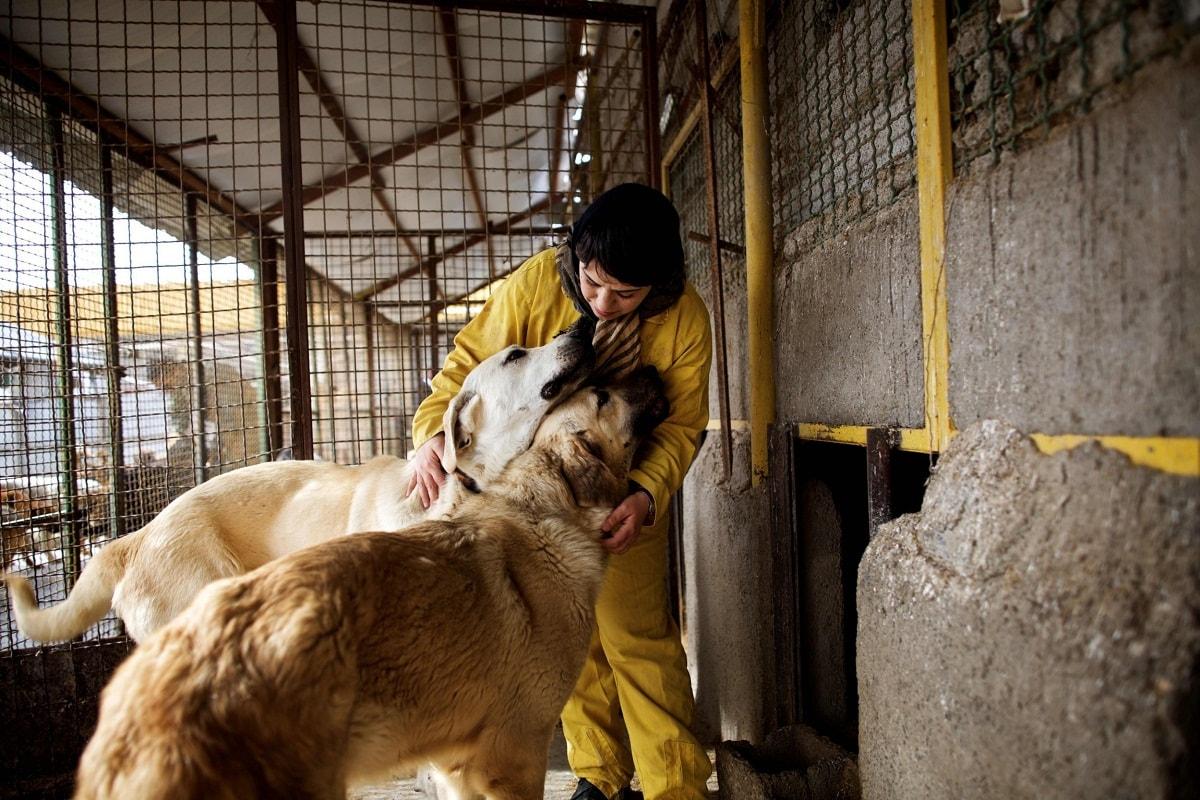 پناهگاه حیوانات