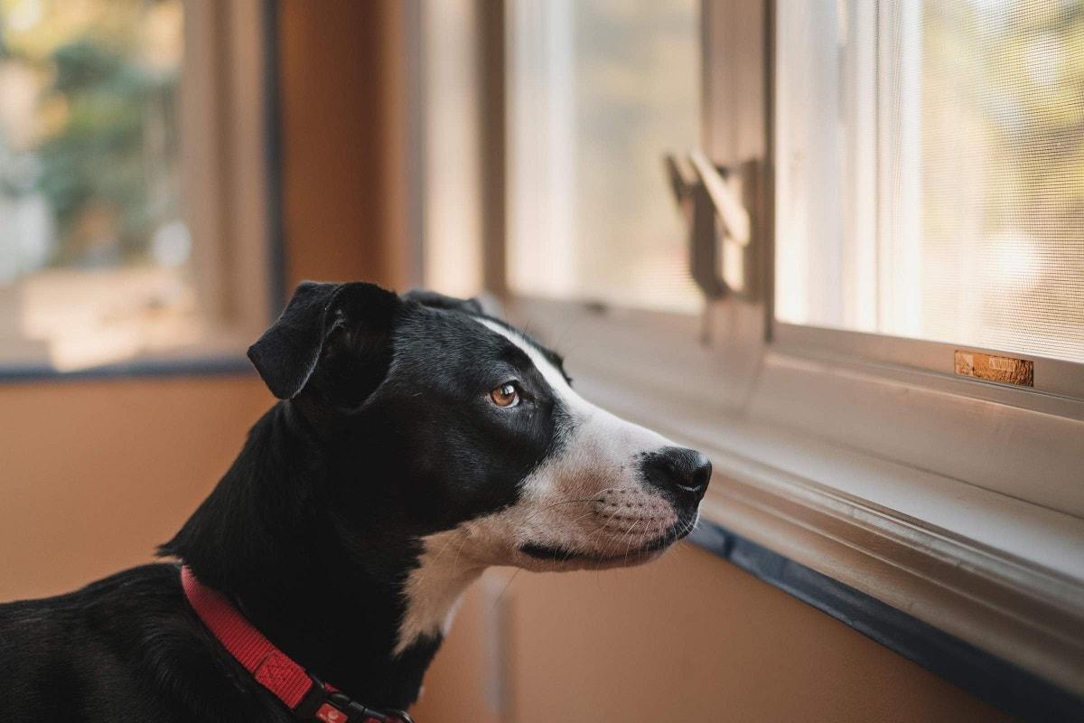 حیوانات - حیوانات خانگی - اضطراب