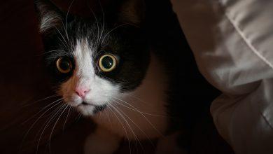 Photo of حیوانات خانگی میتوانند از اضطراب رنج ببرند