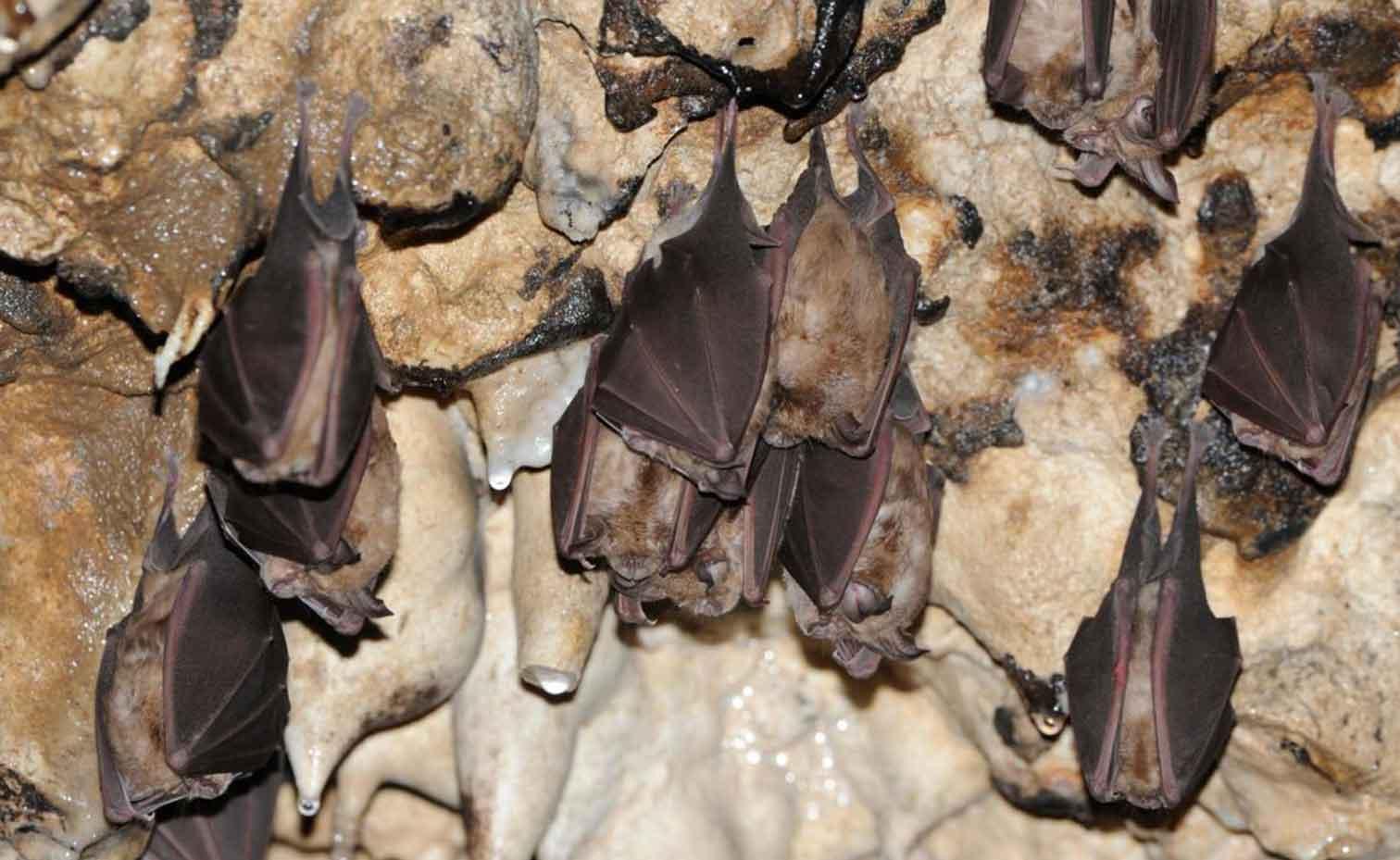 غار خفاش ایلام