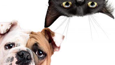 Photo of آیا سگها یا گربهها در درمان تنهایی عملکرد بهتری دارند؟