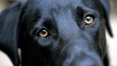 Photo of چگونه میتوانید آنچه را که سگها واقعا احساس میکنند، درک کنید؟