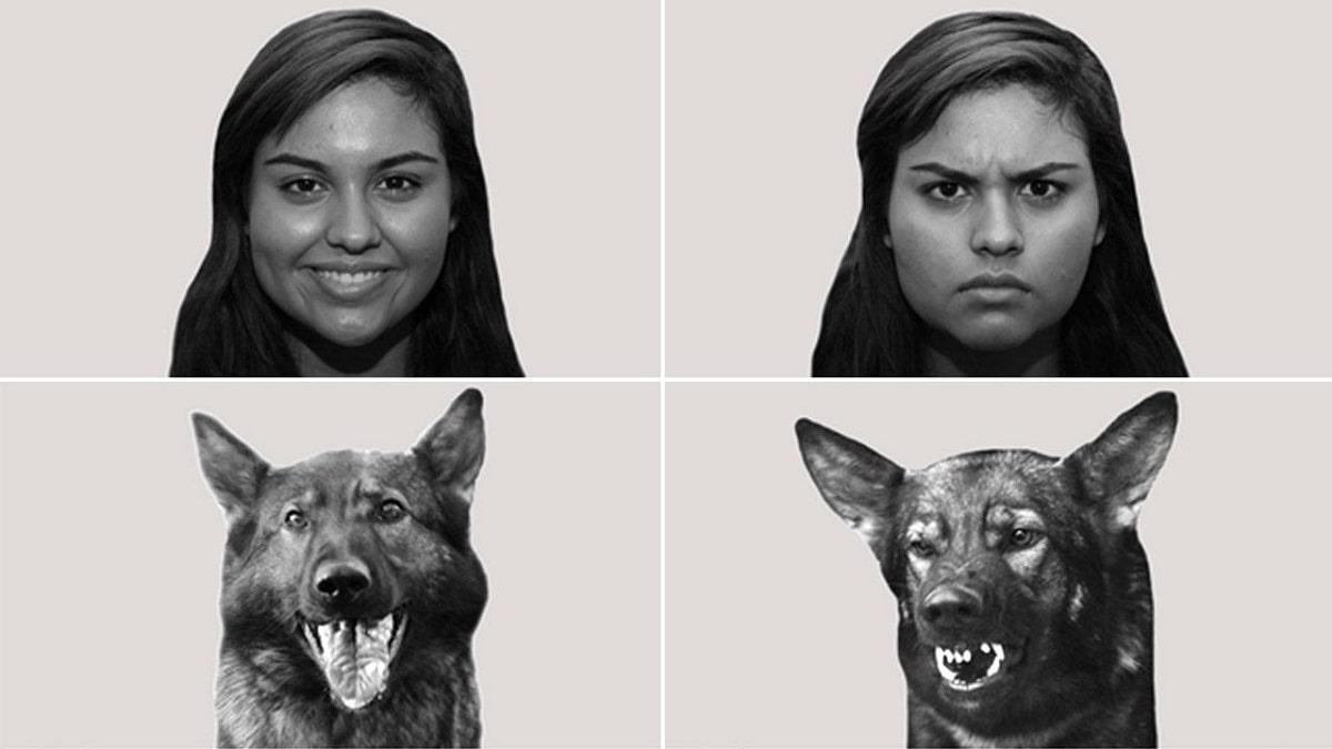 تجربههای احساسی سگها - احساس