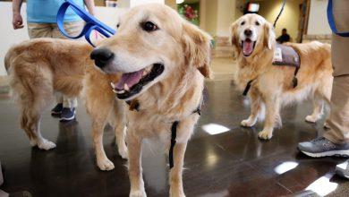 Photo of سگهای درمانی و سلامت روان و جسم
