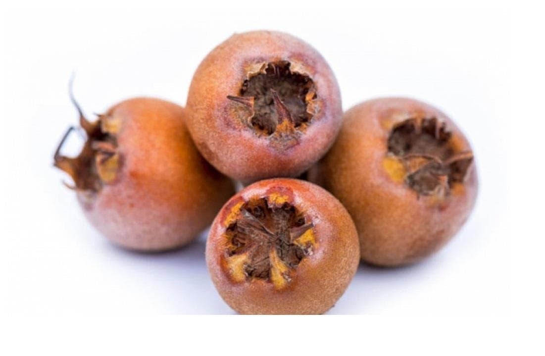 ازگیل یکی از میوههای پاییز