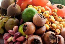 Photo of میوههای پاییز و خواص شگفتانگیز آنها
