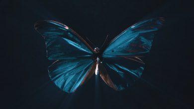Photo of اثر پروانهای حقیقی است؟
