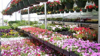 Photo of گیاهان آپارتمانی