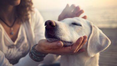 Photo of چرا علم باید خود را با چیزی که مربیان سگ میدانند همراستا کند؟