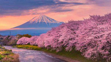 Photo of ژاپن «سرزمین شکوفههای گیلاس؛ ساکورا»