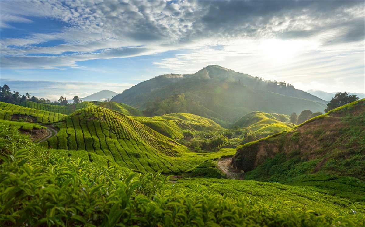 Malaysia-aradmag-018