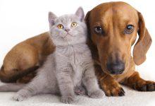Photo of دنیای گربه و درک زبان و مراقبت از آن
