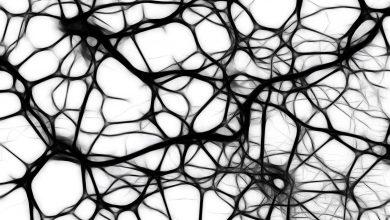 Photo of چگونه مغز خاطرات را پنهان میکند